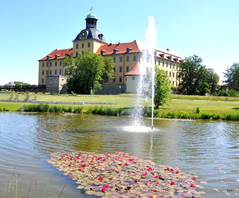 Am Seerosenteich an der Moritzburg -Zeitz