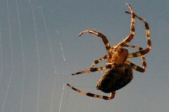 Am Spinnen