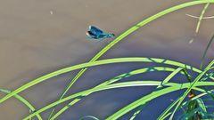 Am Stau der Elbe in Böhmen am Ufer gesehen und ich wollte von den Flügeln mehr sehen,