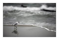 ... am Strand