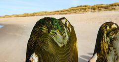 Am Strand auf Sylt .DSC_8407