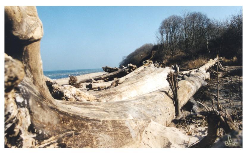 Am Strand von Brook - #2