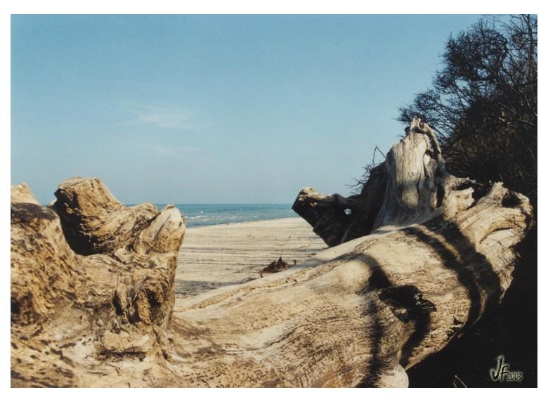 Am Strand von Brook - #3