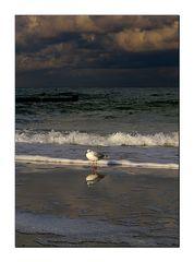 Am Strand von Graal-Müritz