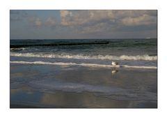 Am Strand von Graal-Müritz Originalbild