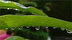 Am Tag als der Regen kam......