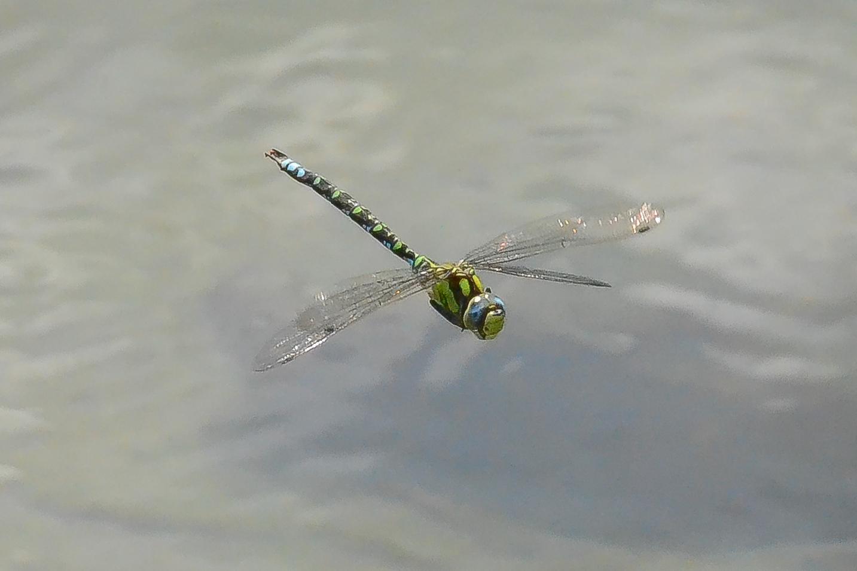 Am Teich 1