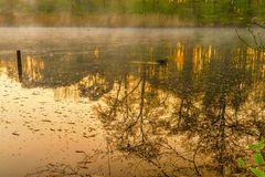 Am Teich steht alles Kopf