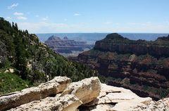 Am Transept Trail am North Rim des Grand Canyon...
