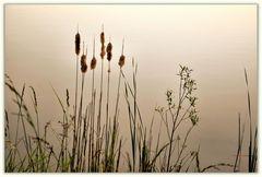 am Ufer......