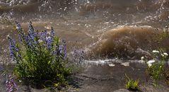 Am Ufer der Hochwasser führenden Mur!