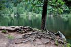 am Ufer des Lac Forlet / Vogesen