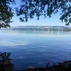 Am Ufer des Sempachersees ...