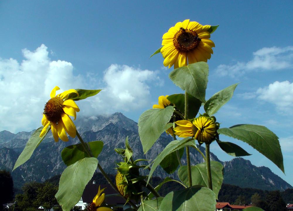 Am Untersberg in Österreich