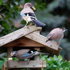 Am Vogelhäuschen