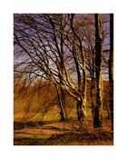 Am Wald 03