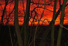 Am Waldrand bei Sonnenaufgang