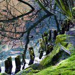 Am Waldseeufer