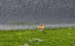 Am Wasser ist das Grass  ...        DSC_4892-3