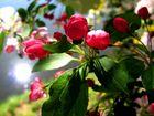 "Am Wasseschloß ""Trips"" Blütenpracht in der morgen Sonne."