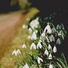 Am Wegrand...oder Frühling in Wales
