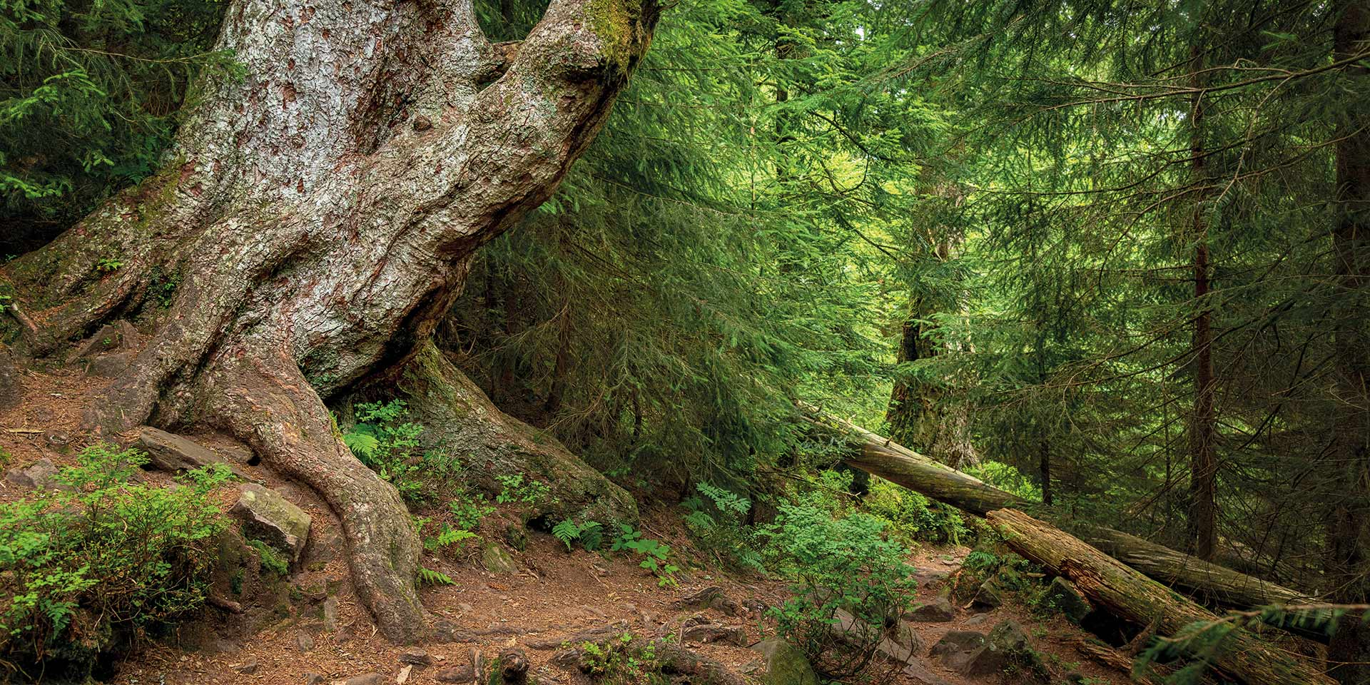 Am Wildsee wo der Schwarzwald am wildesten ist