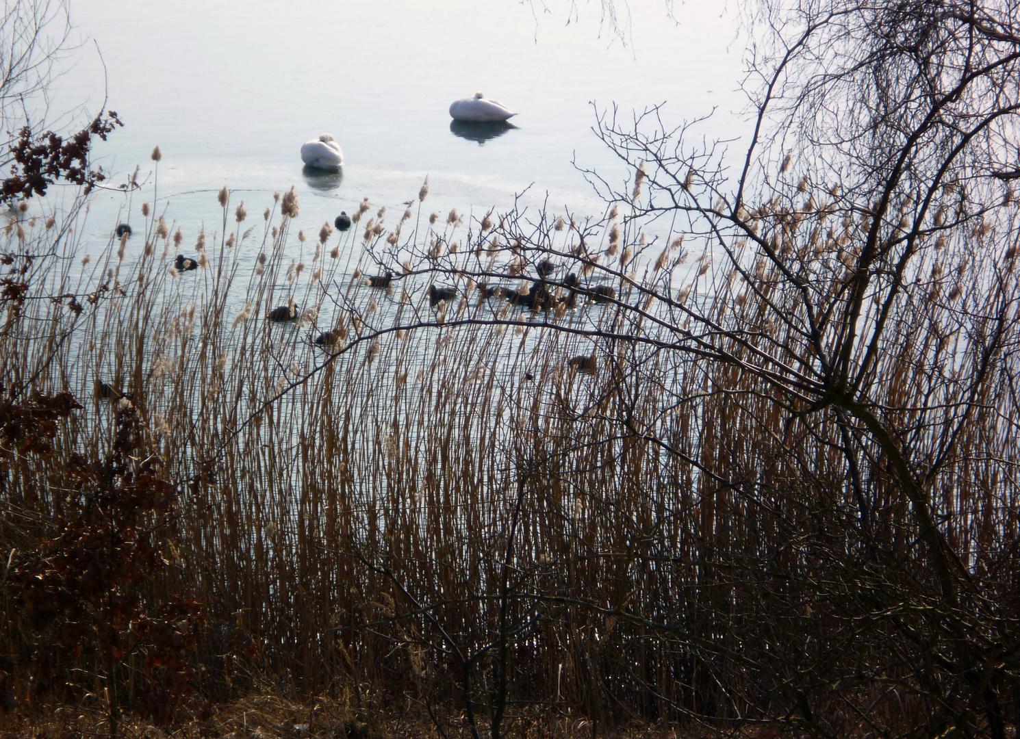 Am winterlichen See