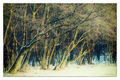 Am Winter.Waldrand ...