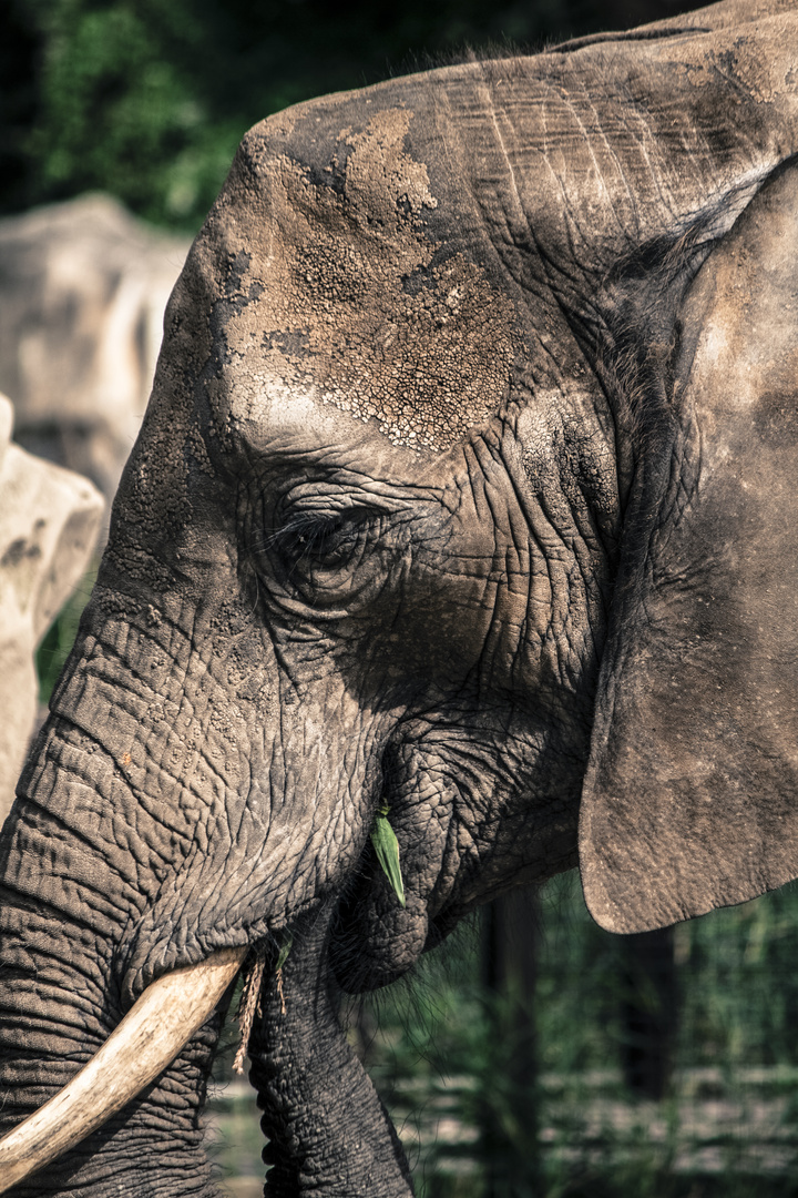 am Zoo