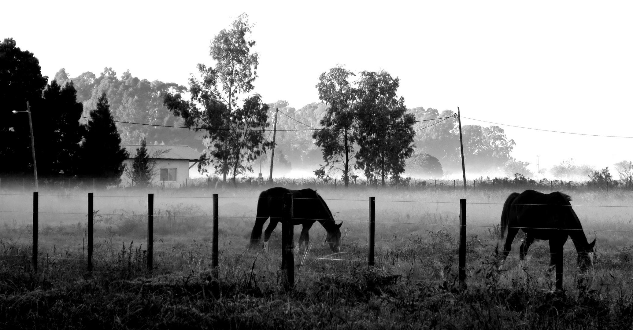 amanecer de pampa y niebla