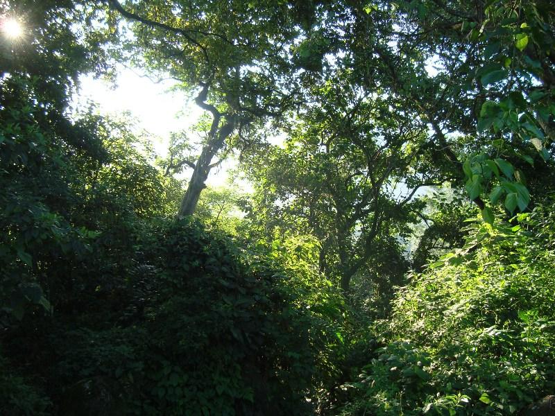 Amanecer en el Bosque