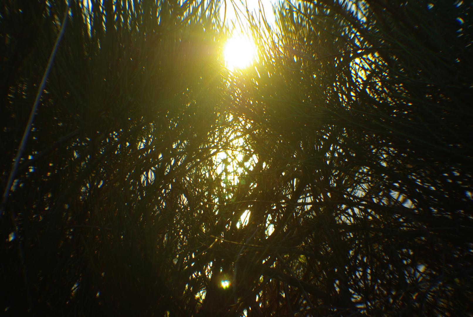 amanecer entre arbustos