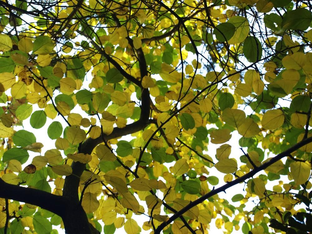 Amarillas y Verdes