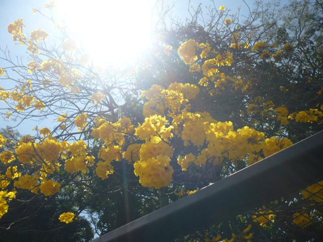 Amarillo, amarilo