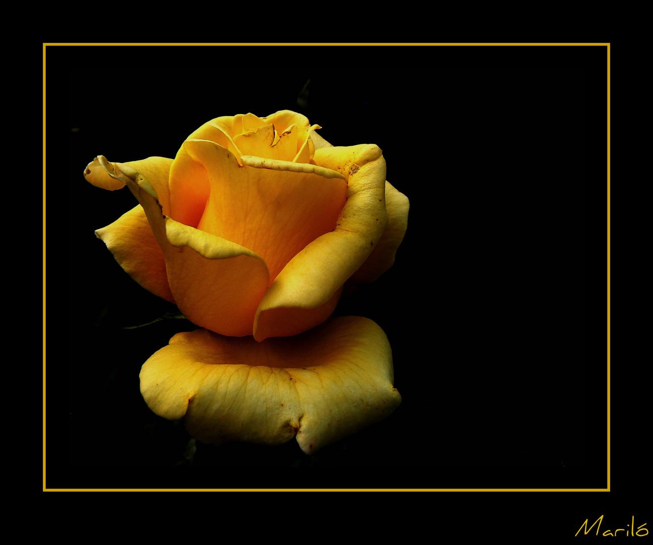 Amarillo sobre negro