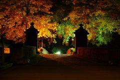 Amazing autumn night