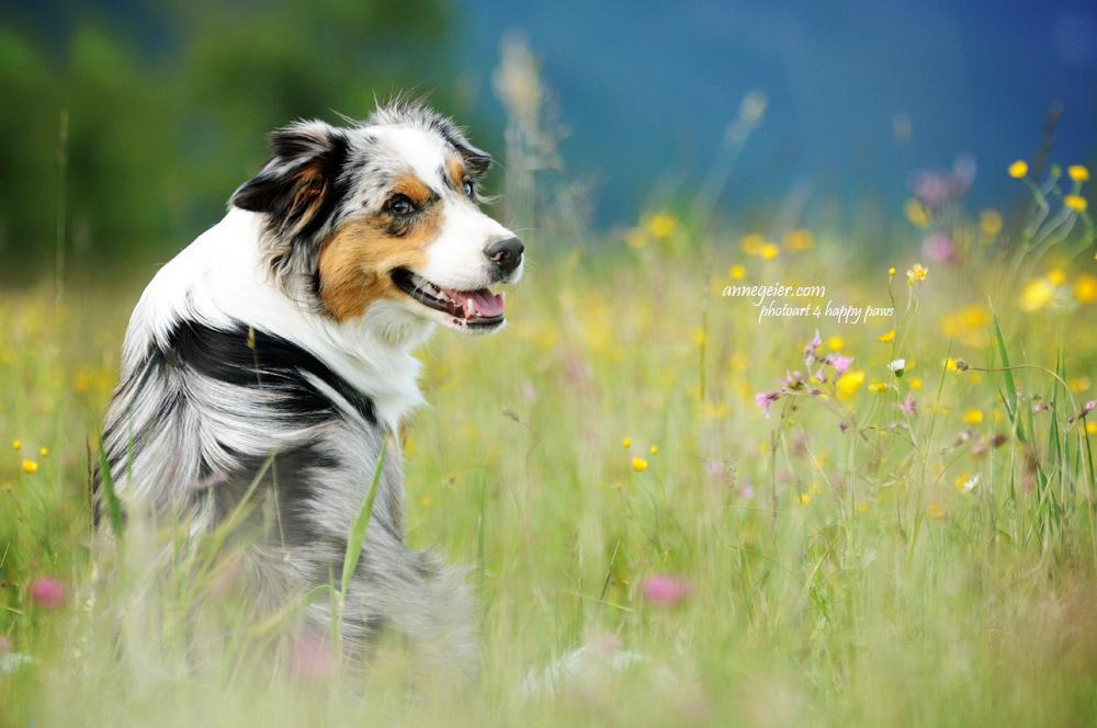 Amazing dog - Duke