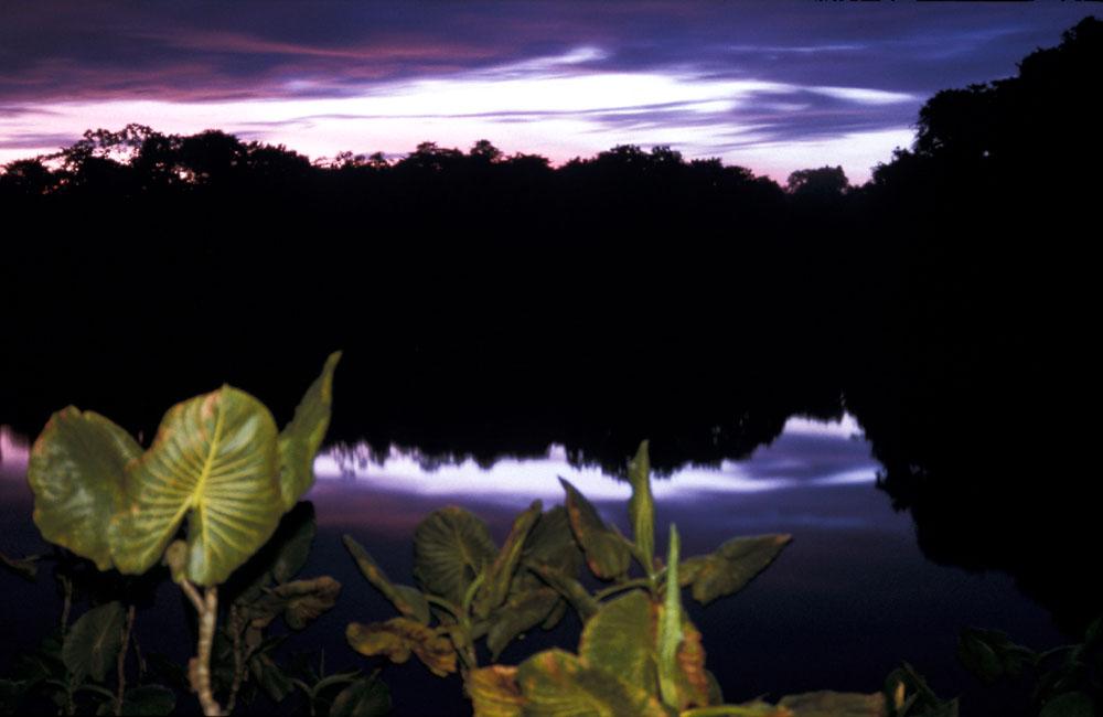 Amazonien Ecuador