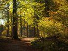 Ambiance d automne en forêt Neuchâteloise