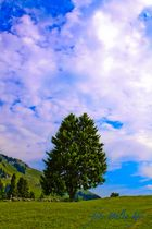 Amden Schweiz
