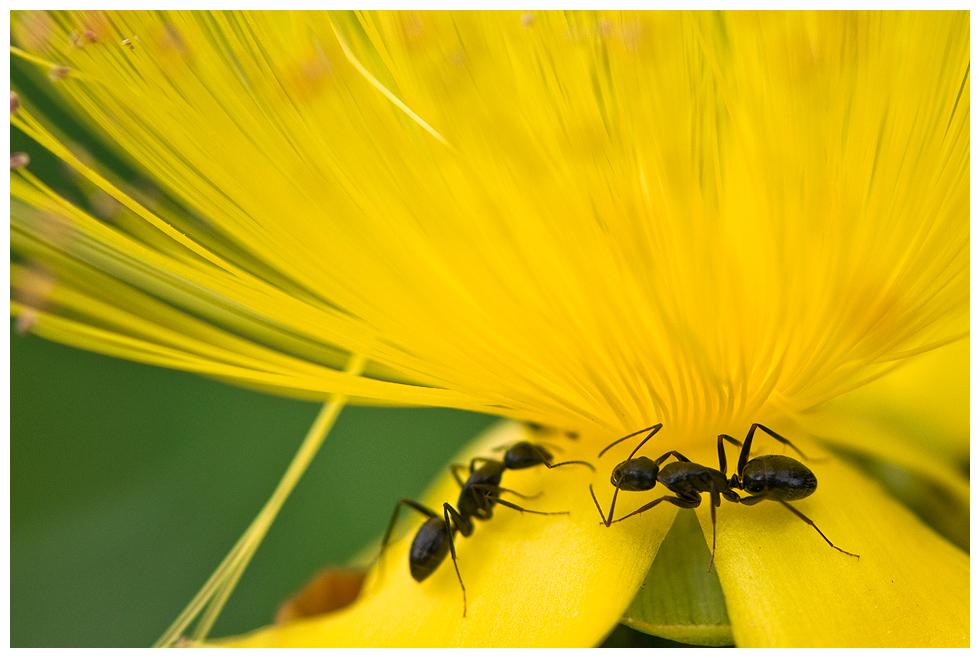 Ameise und Bemeise