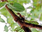 Ameisen auf dem Baum