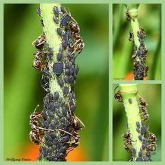 Ameisen bei der Arbeit