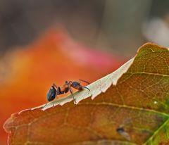 Ameisen - Herbst - Faszination!