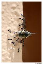 Ameisen und Ihre Opfer