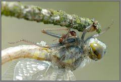 ameisen und libellen