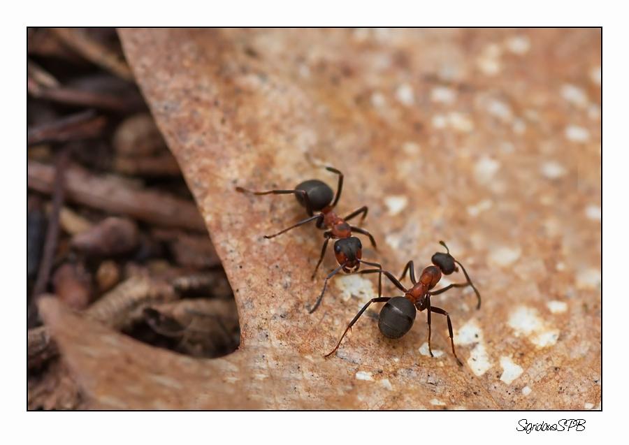 Ameisen unter sich....