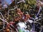 Ameisen vs. Rüsselkäfer