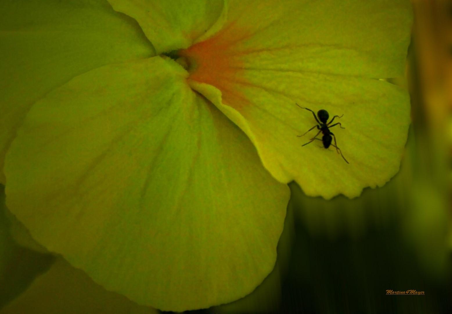 Ameisen...........gelb