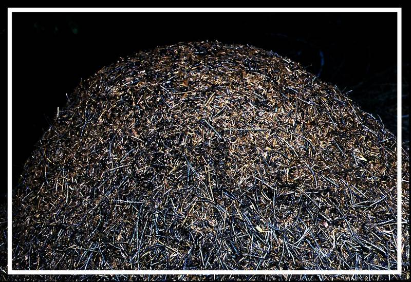 Ameisenhügel (1,50 Meter hoch)